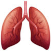 High Flow Oxygen in Chronic Obstructive Pulmonary Disease: improved work of breathing or respiratory effort?